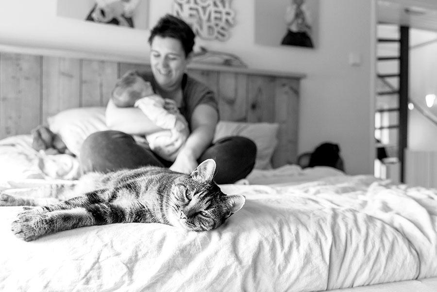 newborn fotograaf Pijnacker poes